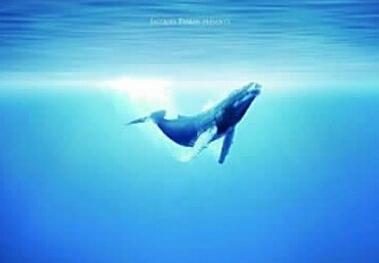 壁纸 动物 海洋动物 桌面 379_263